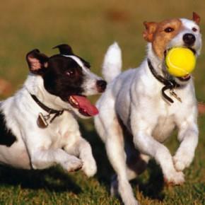 Ciutadans (Cs) reclama que es creï un banc de dades amb l'ADN de gossos de Sabadell
