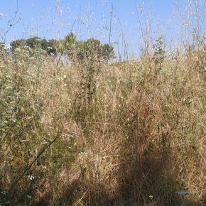 Ciudadanos (Cs) Sabadell pide un plan antiincendios para el rodal de Sabadell.