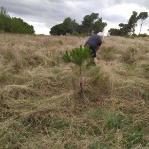 Ciutadans (Cs) Sabadell denuncia la situació de deixadesa en la que es troba el Bosc de Can Deu